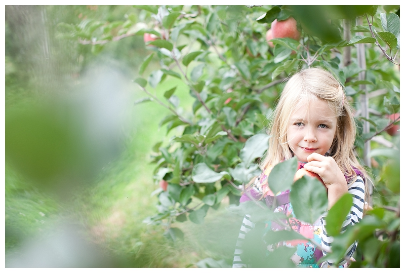 apple picking_973